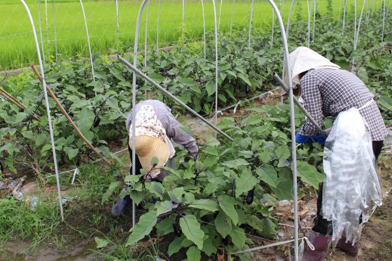 農業で一緒に夢を叶えませんか?